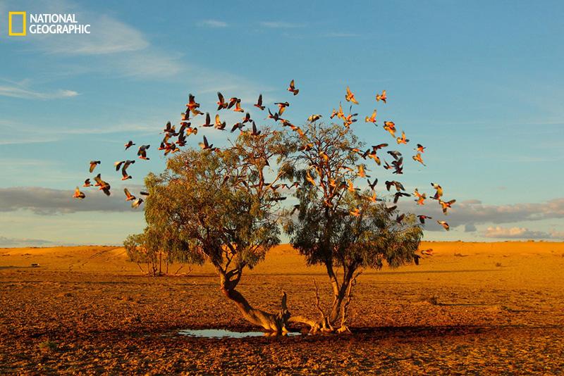 La historia de las 10 mejores fotos del National Geographic 2014
