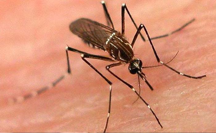 Rodríguez confirma más de 80 mil casos de dengue y 26.451 de chikungunya