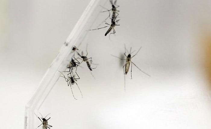 Descubren anticuerpo capaz de neutralizar el dengue