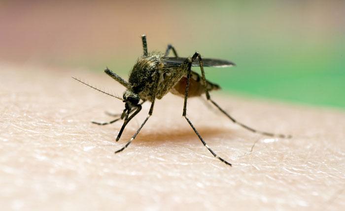 OMS: Venezuela registró aumentos de paludismo durante 2014