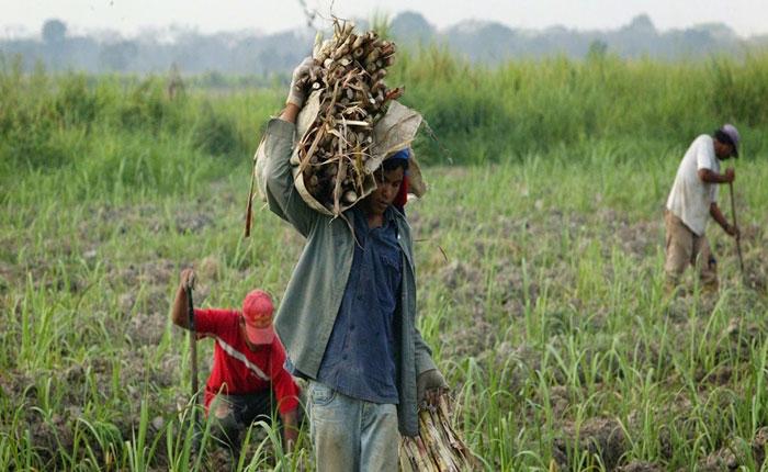 Fedenaga y Fedeagro pedirán apoyo internacional para recuperar producción