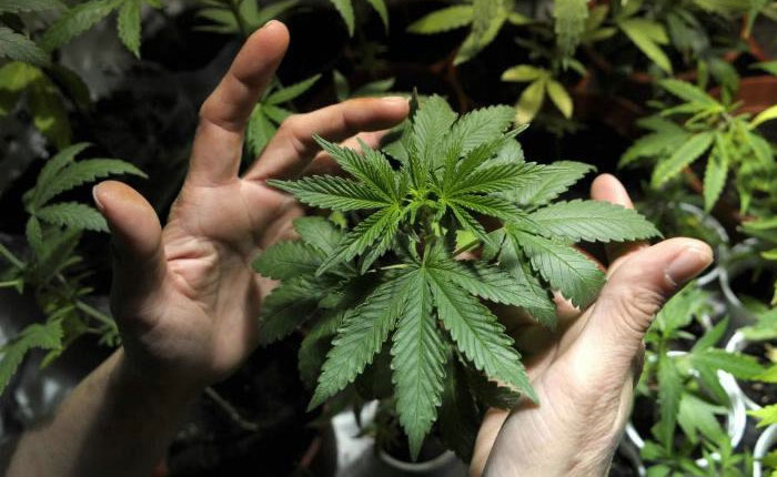 MarihuanaUR