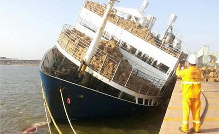 Se hundió en Brasil un barco con 5.000 reses que venía a Venezuela