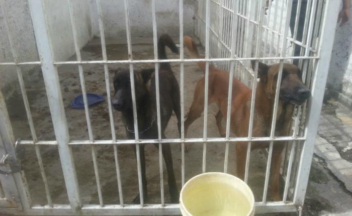 Perros en resguardo en Polisalias
