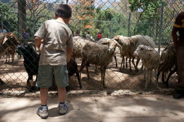Fiscalía y Cicpc investigan muerte del caballo negro del Zoológico de Caricuao