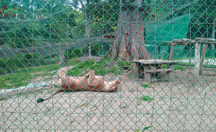 Sindicato de Inparques pide protección para animales del Parque del Este y Zoológico de Caricuao por bacteria