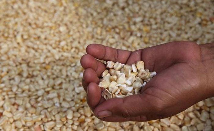 Fedeagro solicitó aumento del precio del maíz blanco
