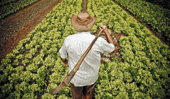 Rodesindo: un agricultor de mi pueblo, por Carlos Dorado