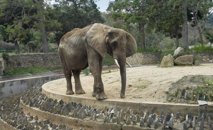 Murió la elefanta Ruperta del Zoológico de Caricuao