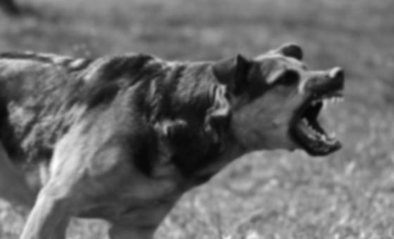 Un perro rabioso siempre dispuesto a morder, por Carlos Alberto Montaner