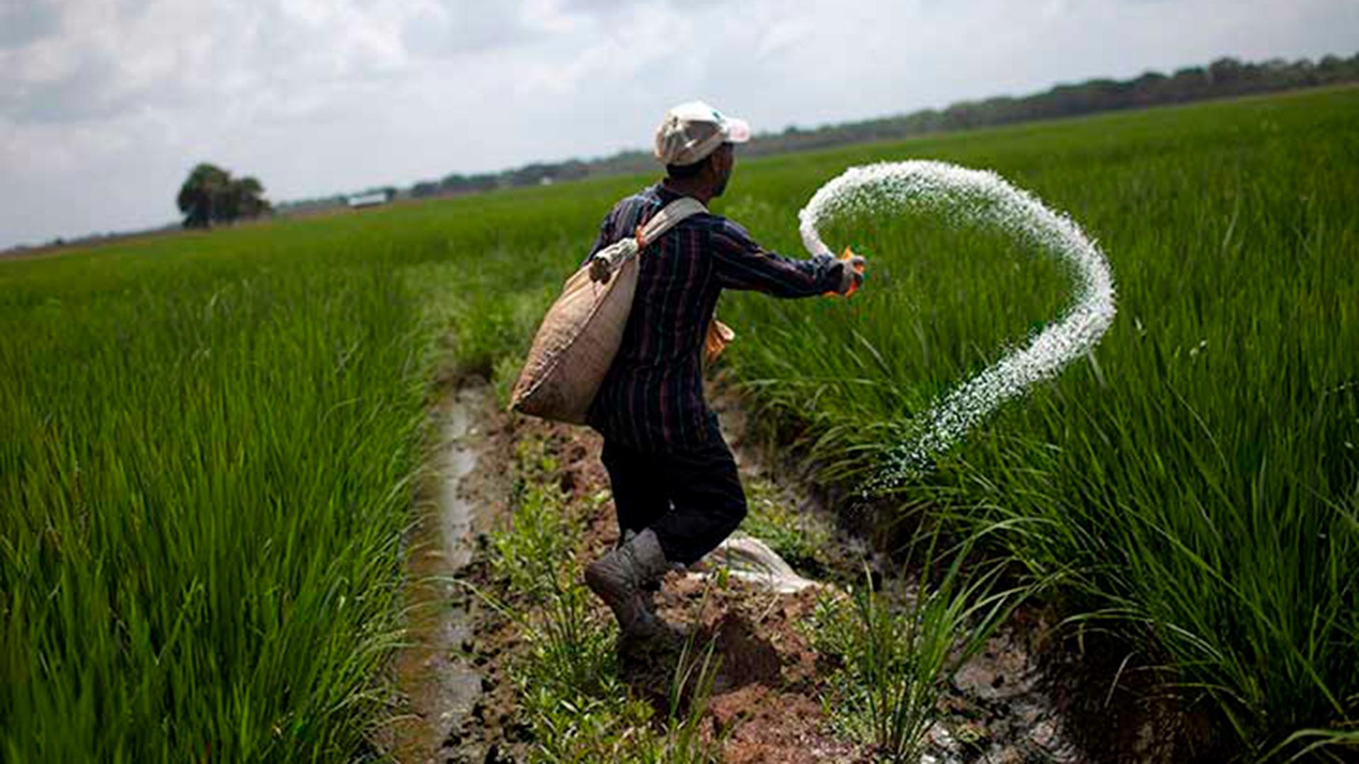 FAO alerta sobre el deterioro de la seguridad alimentaria en Venezuela durante 2020