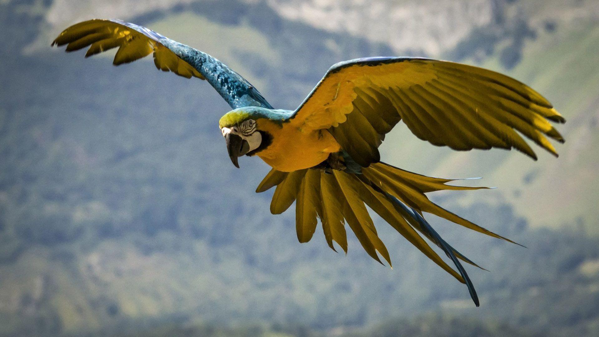 Audubon Venezuela celebra sus 50 años con eventos dedicados a las aves